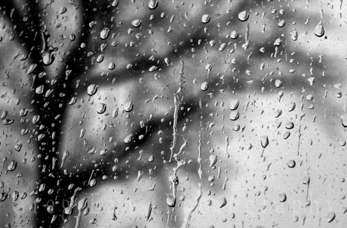 black_and_white_rain_drops-1747